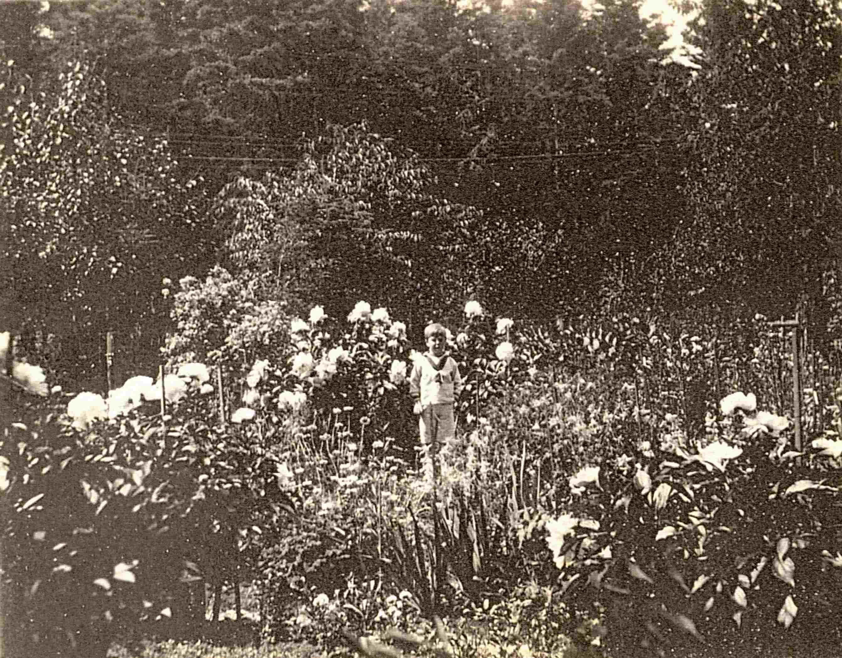 Un enfant vêtu d'un costume de matelot est photographié au milieu d'un jardin fleuri à l'anglaise.
