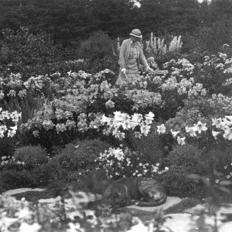 A woman trimming plants in a flower garden with a dog sleeping on a flagstone in the foreground.