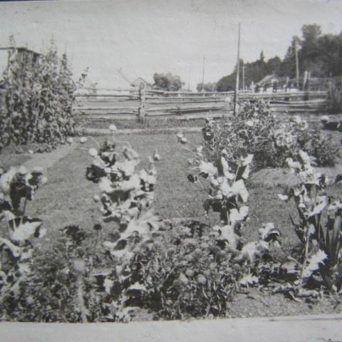 Un terrain gazonné est agrémenté de quelques îlots fleuris. Il est ceinturé d'une clôture de perches.