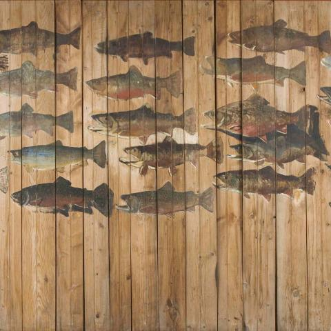 Painting of two dozen trout on vertical wallboards.